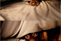Pet Photgraphy / by Lesli Harker