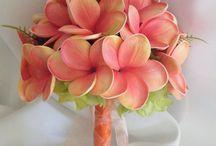 Plumeria and frangipani  / Gorgeous
