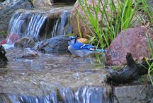 Bird Watching / Because birds love bathing in your water feature!