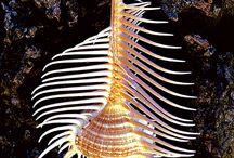 Shells / by Joel Castellanos Navarrete
