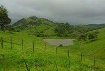 Choveu, tá verde
