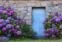 Hortensien / Hortensien sind außergewöhnlich schöne Blumen, welche spezielle Pflege benötigen. Auf dieser Pinnwand findet Ihr alles zum Thema Hortensien.