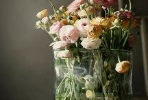 life: f l o r a / flowers.nature.beauty.
