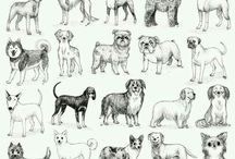 Animal drawings