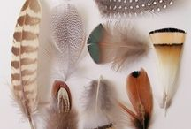 Feather pretty