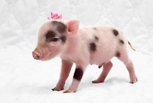 Pigs / The cutest things ever!!!!!! / by Brooklyngarland