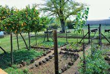 Huerto / Jardin