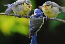 I love birdies  / by SueGeeQ