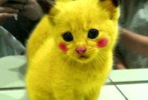 pisicikler :D