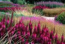 Garden: Softer Planting & Form / by Laara Copley-Smith Garden Design