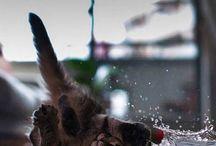 Эти забавные котики  These funny SEALs / Любить кошку можно только на ее условиях. Автор: Пол Грэй Loving cat can only be on her terms. Author: Paul Gray
