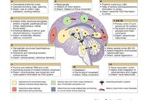 Cognitive Neuroscience / by Kenneth Yoncich