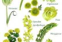 Подбор цветов