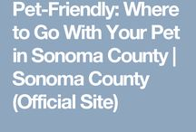 Where to Take Your Dog in Sonoma County / Your furry friend is welcome to many more places than you probably think in Sonoma County! Lodging, Camping, Wineries, Breweries, Restaurants, Shopping and more. More: http://www.sonomacounty.com/articles/pet-friendly-where-go-your-pet-sonoma-county