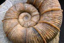 Fosszíliák