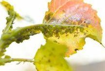 vosky na listoch