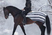 ~For the horses~ / by Hannah E Johnston