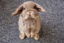 Bunnies / by Brenna Shultz