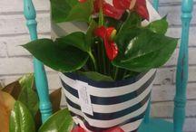 pot plants ♡
