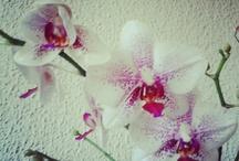 Flores y naturaleza