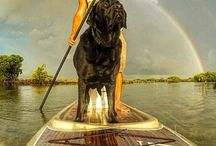 Sup Dog / Stand up paddling boarding pictures of middle aged guys who love to paddle board with their dogs. / by Tribal Joe Paddling