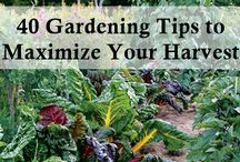 Gardening / by Nicole Durfee-Sherlock