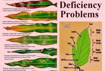 problemy z roślinami
