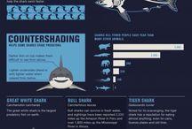 Infographics (Nature/Animals)