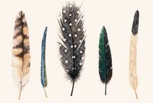 feathers / illustrations and art capturing the magic of feathers