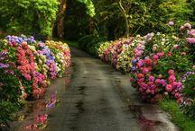 Flowers of Madeira Island