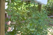 our veg garden