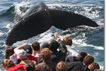 Whale Watch on Cape Cod