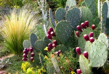 Desert Plants / by Tanque Verde Ranch