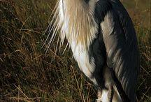 aves, animais / by Marelisa Almeida