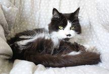 Kattene / Billeder af vores to katte, Rosa og Pelle.
