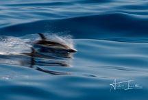 Photography de delfín