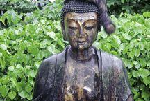 Gatti buddisti