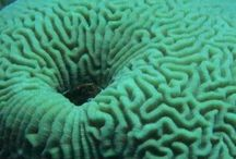 Scuba diving / Pictures from various diving trips