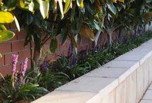 Garden sprucing