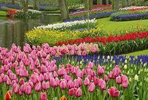 flowers/garden/birdhouses / by Tanya Mansfield