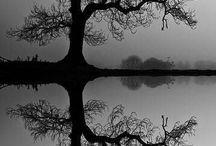 fotografia. przyroda