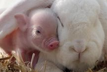Cute and Beautiful Animals / by Pk Inman