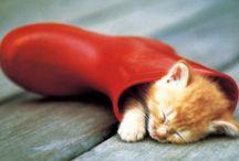 Uni suloinen