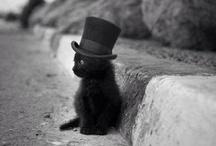 Black cats / by Leora Jones