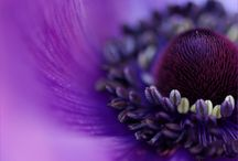 awesome purple