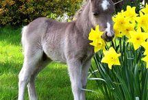 littlest cutest horses