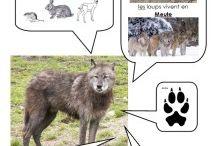 Le loup animal