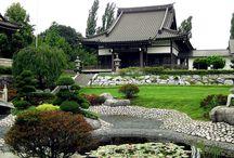 Japanese garden / Japanese garden