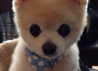 Adorable Dog Photos / by Some Puppy To Love