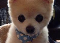 Adorable Dog Photos / by SomePuppyToLove